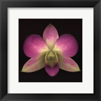 Framed Dendrobium