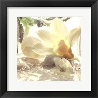 Spa Garden III Framed Print