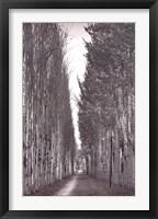 Framed Poplars 2, Kashgar