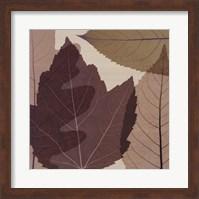 Framed 4 Leaves 2