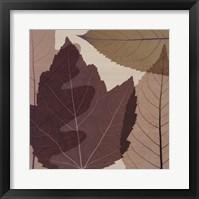 4 Leaves 2 Framed Print