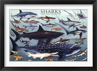 Framed Sharks