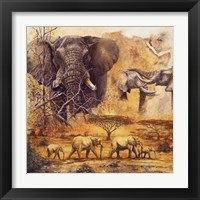 Safari II Framed Print