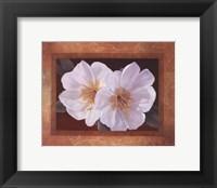 Framed Morning Bloom