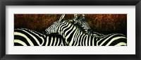 Framed Les deux zebres