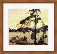 Framed Jack Pine
