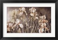 Framed Field of Irises