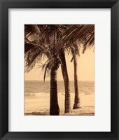 Palm Beach II Framed Print