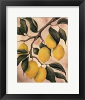 Framed Italian Harvest - Lemons