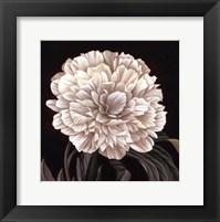 Framed Full Bloom II