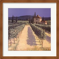 Framed Vineyard Shadows