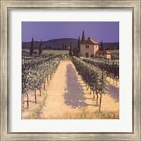 Framed Vineyard Shadows