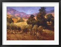 Southern Vineyard Hills Framed Print