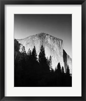 Framed El Capitan In Trees