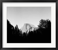 Framed Half Dome In Trees