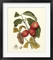 Framed Island Fruits III