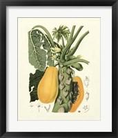 Framed Island Fruits IV