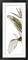 Framed Bird Of Paradise Triptych I