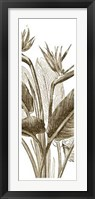 Framed Bird Of Paradise Triptych II