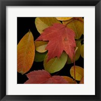 Framed Vivid Leaves III