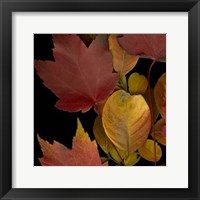 Framed Vivid Leaves IV