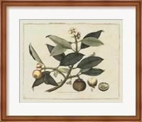 Framed Delicate Botanical I