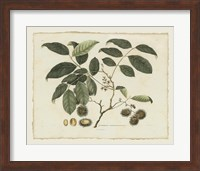 Framed Delicate Botanical III