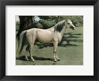 Framed Cassell's Horse I