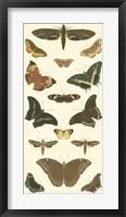 Framed Butterfly Panel II