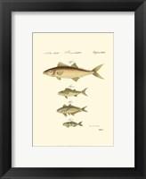 Framed Fish Anthology II