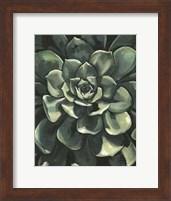 Framed Printed Lunar Succulent I