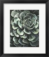 Framed Printed Lunar Succulent II