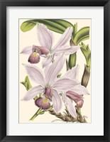 Framed Mini Delicate Orchid I