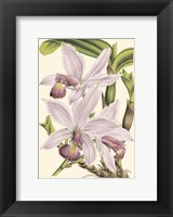 Framed Mini Delicate Orchid I