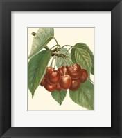 Framed Red Cherries