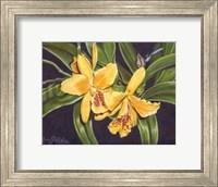 Framed Vibrant Orchid I