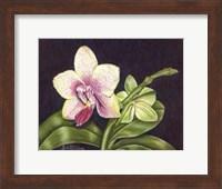 Framed Vibrant Orchid II