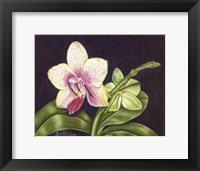 Framed Vibrant Orchid II