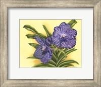 Framed Vibrant Orchid III