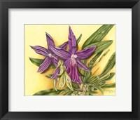 Framed Vibrant Orchid IV