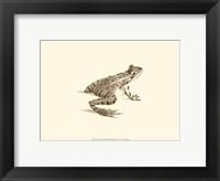 Framed Sepia Frog II