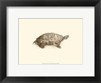 Framed Sepia Turtle I