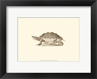 Framed Sepia Turtle II