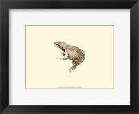 Framed Sepia Frog III