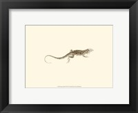 Framed Sepia Lizard II