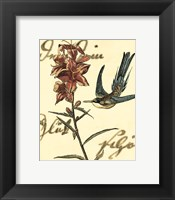 Framed Small Hummingbird Reverie IV