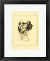 Framed Printed Danchin Setter