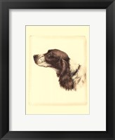 Framed Printed Danchin Cocker Spaniel
