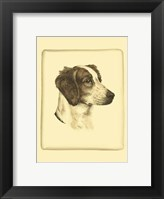 Framed Printed Danchin Brittany Spaniel