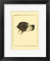 Framed Printed Danchin Pointer